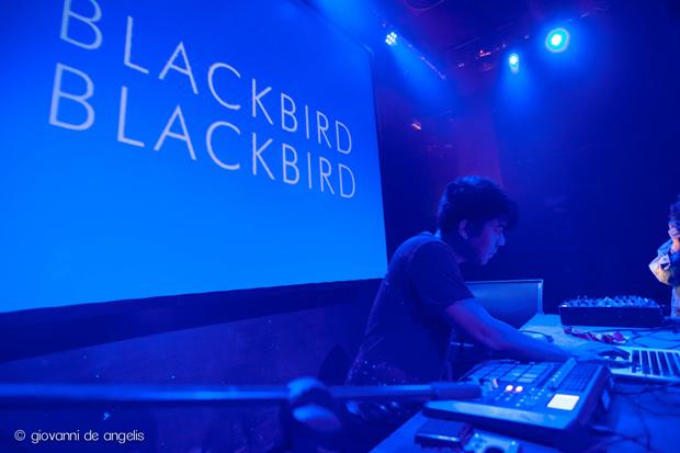 SpringAttitude-Blackbird